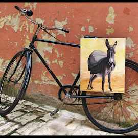 On your bike by Mandy Hedley - Transportation Bicycles ( picture, bike, donkey, street, croatia,  )