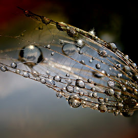 Drops Dreaming Before Storm by Marija Jilek - Nature Up Close Natural Waterdrops