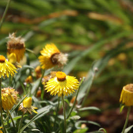 by Asad Marghoob - Flowers Flower Buds
