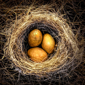 golden eggs by Marianna Armata - Artistic Objects Other Objects ( bird, macro, easter, nature, nest, gold, marianna armata, egg )
