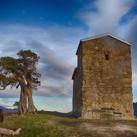 Standing tall by Gerhard Korts - Landscapes Travel ( tree, church, on top, georgia, mtskheta )