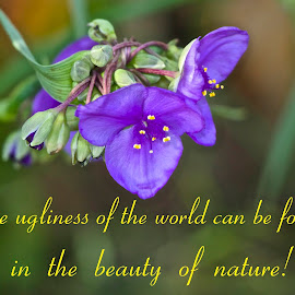 Beauty Of Nature by Kathy Suttles - Typography Captioned Photos ( nature, purple, beauty )