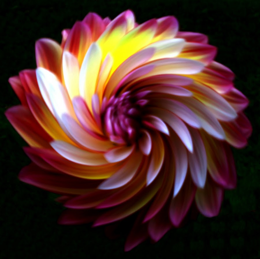 Dahlia In A Blender 7 by RMC Rochester - Digital Art Abstract ( macro, random, abstract, manipulation, colors, flower )