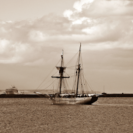 The Young Endeavour by Andrew Jensz - Transportation Boats ( portland, tall ship, victoria, endeavour, sailing ship )