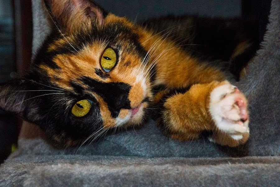 by Patti Cooper - Animals - Cats Kittens