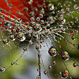The Game Of Flowers Dew by Marija Jilek - Nature Up Close Natural Waterdrops