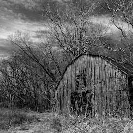 Just an old barn by Rob Heber - Buildings & Architecture Decaying & Abandoned ( countryside, damaged, old, shack, rusty, rustic, farm, barn, rusting, dead, bare, decaying, peeling, ranch, structure, building, dry, grass, rural, country, field, shed, neglected, wooden, winter, deteriorating, rusted, trees, rotting, abandoned )