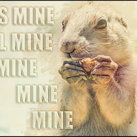 Mine by Sheen Deis - Typography Captioned Photos ( prairie dog, mine, typography )