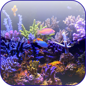 Aquarium Video 3D Wallpaper