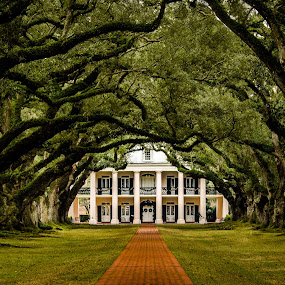 Oak Alley Plantation by Clement Stevens - Buildings & Architecture Other Exteriors ( louisiana, antebellum mississippi river mansion in vacherie, architecture, oak alley, plantation )