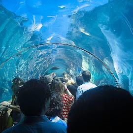 Atlantis Aquarium by Nick Goetz - City,  Street & Park  Amusement Parks