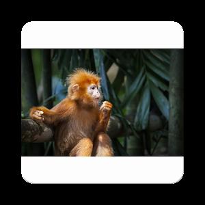 Animals-Monkey-King10