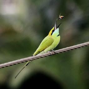 by Prakash Tantry - Animals Birds