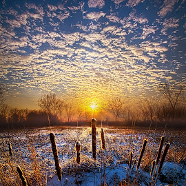 One Day At A Time by Phil Koch - Landscapes Prairies, Meadows & Fields ( vertical, travel, yellow, love, sky, nature, snow, weather, perspective, light, orange, trending, colors, art, twilight, white, mood, journey, horizon, portrait, country, environment, winter, dawn, season, serene, outdoors, lines, natural, hope, inspirational, wisconsin, ray, joy, landscape, sun, photography, life, emotions, dramatic, horizons, inspired, clouds, office, park, heaven, beautiful, scenic, living, morning, shadows, field, unity, blue, cattails, sunset, amber, peace, meadow, beam, earth, sunrise )