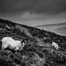 by Elliot Moore - Animals Other