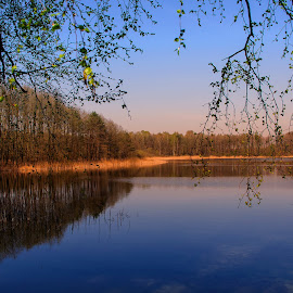 forest lake by Tomasz Marciniak - Landscapes Waterscapes ( lake, forest, morning )