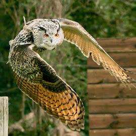 by Bernie Penman - Animals Birds