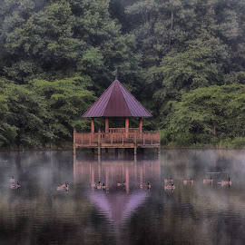 Morning at Meadowlark Gardens by Kimberly Sharp - Landscapes Waterscapes ( gazebo, serenity, geese, canon 5dmk4, misty, trees, water, mist, peaceful, morning, canon, morning light, waterscape, serene, landscape, fog )