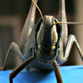 close-up by Raajesh Thakur - Animals Insects & Spiders