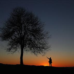 Wish Tree by Lovro Konjedic - Landscapes Prairies, Meadows & Fields