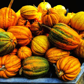 Table of Pumpkins by Dave Walters - Nature Up Close Gardens & Produce ( pumpkins, nature, garden, colors, fall harvest )