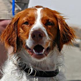 Red Dog picmonkey wwm.jpg