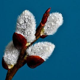 by Eugenija Seinauskiene - Nature Up Close Other plants
