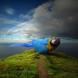 Parrot's world by Tomasz Z - Digital Art Animals ( photomanipulation, parrot, ocean, madeira, photoshop )