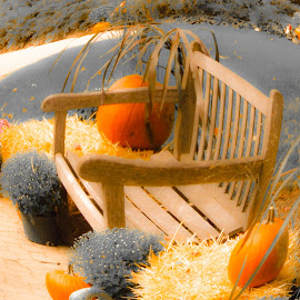 BOUNTY by Debra Singleton - Novices Only Landscapes ( bench, seasons, pumpkins, parks, fall, flowers )