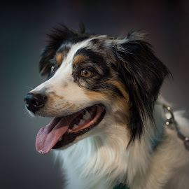 Dog by Aleksander Cierpisz - Animals - Dogs Portraits
