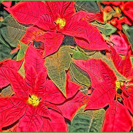 Red Poinsettia Artography by Robin Amaral - Digital Art Things ( abstract, artography, poinsettia, christmas card design, christmas, flower )