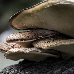 by Paul Scullion - Nature Up Close Mushrooms & Fungi ( plant, nature, tree, nature up close, nature close up, fungus,  )