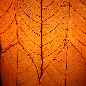 Orange leaves abstract by Robin Rawlings Wechsler - Abstract Patterns ( abstract, orange, patterns, nature, leaf, leaves,  )