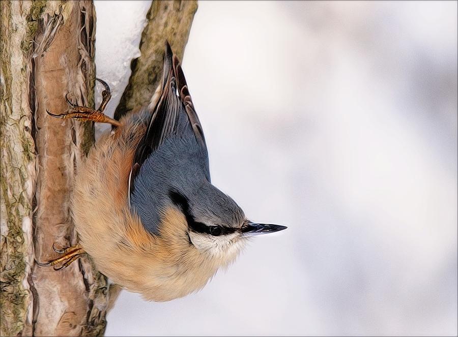 by Zvonko Ferčič - Animals Birds