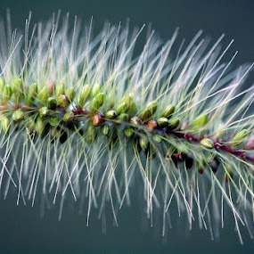 by Zoran Nikolic - Nature Up Close Leaves & Grasses
