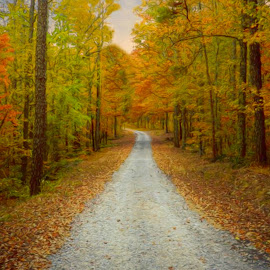 Autumn Pathway by Karen Carter Goforth - Uncategorized All Uncategorized ( autumn, fall, path, trees, road,  )