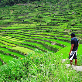 Batad Rice Terraces, Ifugao, Philippines by Andie Andros - Landscapes Prairies, Meadows & Fields ( the viewing deck, philippines )