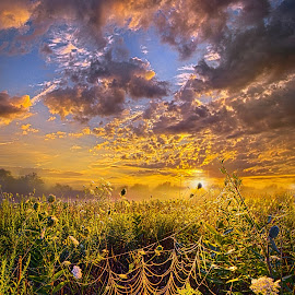 Out And About by Phil Koch - Landscapes Prairies, Meadows & Fields ( vertical, travel, yellow, love, sky, nature, weather, light, trending, colors, twilight, art, mood, journey, horizon, portrait, country, dawn, environment, season, serene, popular, outdoors, lines, natural, hope, inspirational, canon, wisconsin, ray, joy, landscape, sun, photography, life, emotions, dramatic, horizons, inspired, clouds, office, heaven, beautiful, scenic, living, morning, field, unity, blue, sunset, peace, meadow, summer, beam, sunrise, earth )