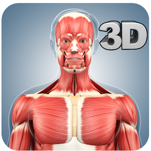 Muscle Anatomy Pro. for PC-Windows 7,8,10 and Mac