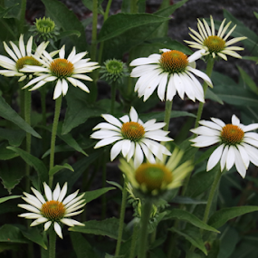 by Per Holt Oksen-Larsen - Novices Only Flowers & Plants