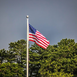 Flying High by Cheryl Thomas - City,  Street & Park  Street Scenes ( flagpole, sky, red, flag, trees, stripes, white blue )
