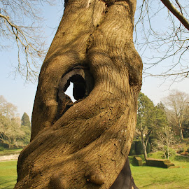 A face in a tree by Pauleen Stewart - Nature Up Close Trees & Bushes ( unusual tree, tree, dartington, landscape, country )