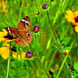 butterfly and golden flowers and more by Pam Satterfield Manning - Animals Insects & Spiders ( animals, bright, colorful, colors, green, yellow, insects, macro, butterflies, nature, yellow and green, nature up close, flowers, golden,  )