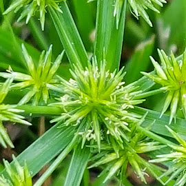 Green  by Christina McGeorge - Nature Up Close Leaves & Grasses ( grass, green,  )