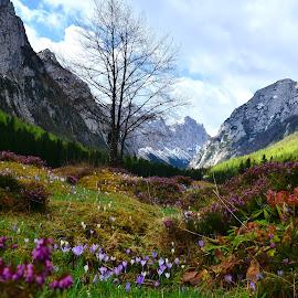 Pomlad v Krmi by Bojan Kolman - Landscapes Mountains & Hills
