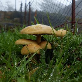 by Filipe Cardoso - Nature Up Close Mushrooms & Fungi