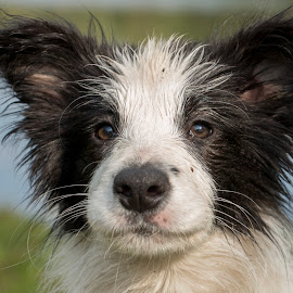 Smile! by Marjan Smit - Animals - Dogs Portraits ( border, bordercollie, collie, happy, dog, water, smile )