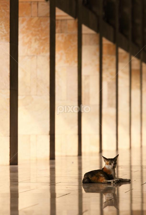 by Henry Pribadi - Animals - Cats Portraits