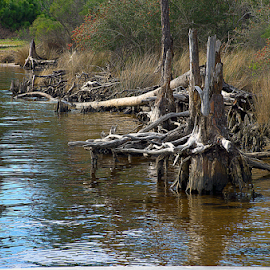 Shoreline by Pam Satterfield Manning - Nature Up Close Trees & Bushes ( water, patterns, nature, shoreline, reflections, trees, nature up close, brush, stumps,  )