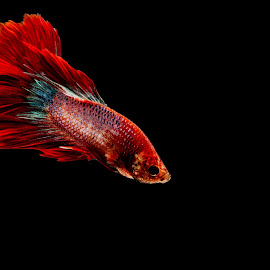 by Erwin Megantoro - Animals Fish